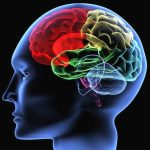 Jak pamięta mózg